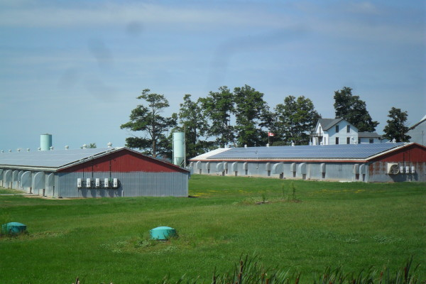 Barns with roof top solar panels