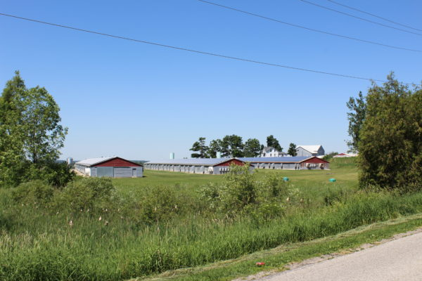 Three barns with solar panels on roofs
