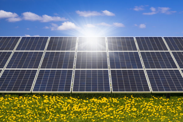 Sunlight gleams off solar panels in wild flower field